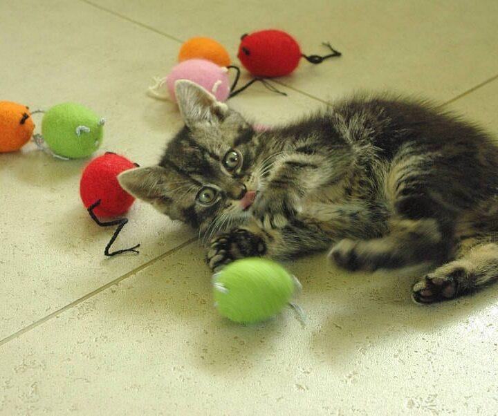 original_cat-toy-felted